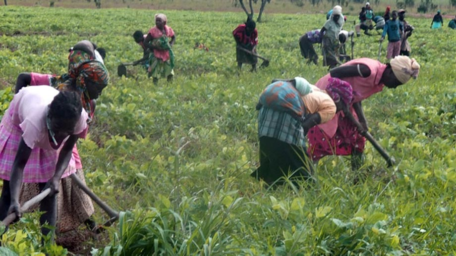 Agriculture and food security in Angola