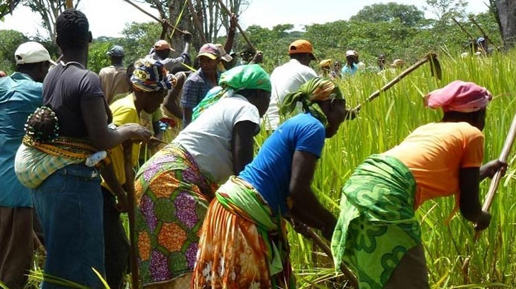 Food security and rural market development