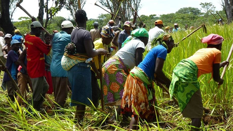 Increase the income of small farmers by introducing soya